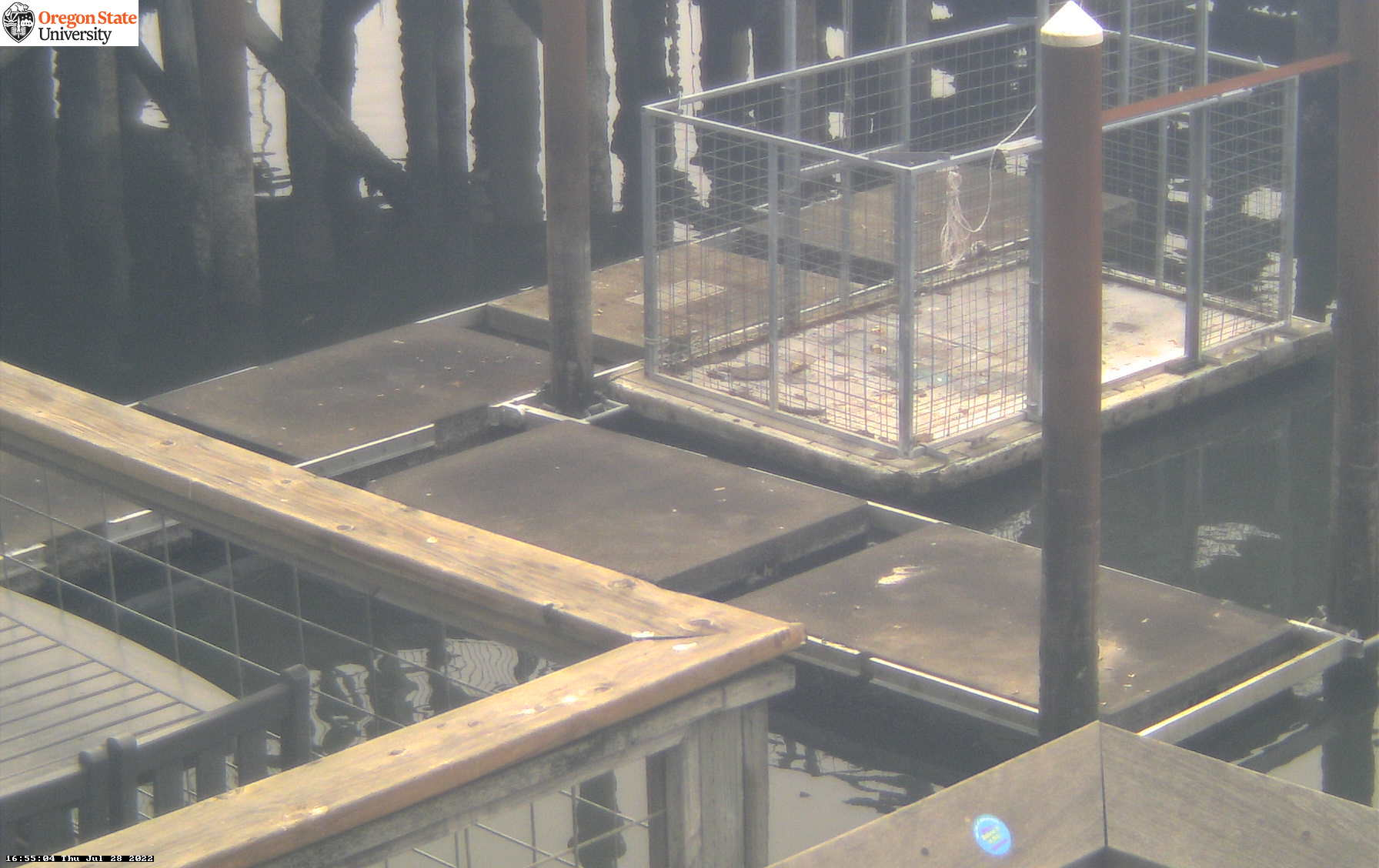 Newport Sea Lions Webcam